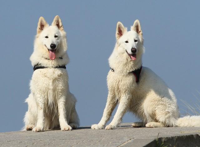 Kenza & Toxine (Mère & Fille)