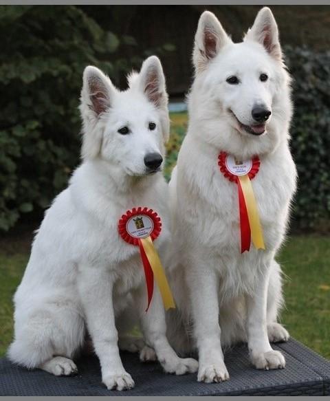 Toxine & Kenza avec leur trophées de charleroi