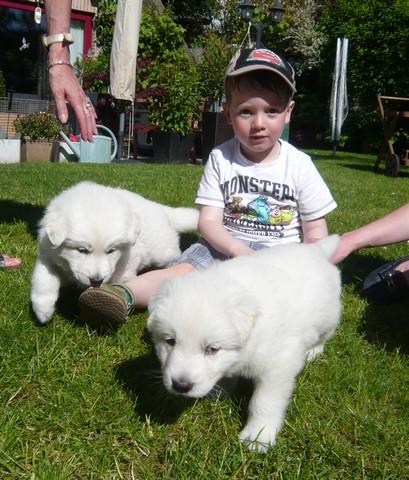 Nos petits loups font connaissance avec de jeune enfant